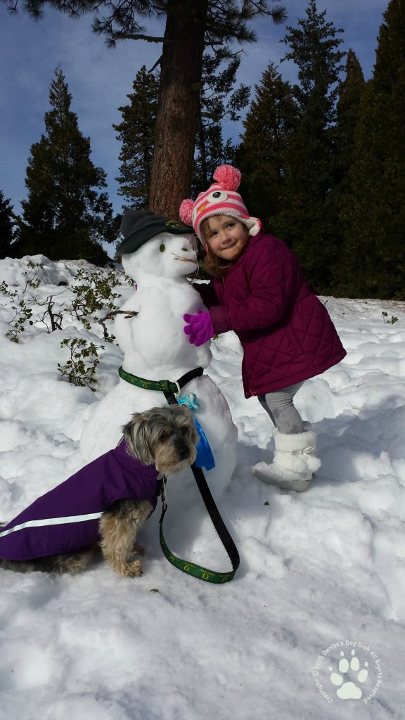 Snowman taking Shasta for a walk and getting a warm hug!