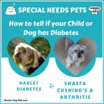 Special Needs Pets Diabetes