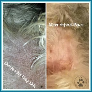 Shasta's Skin Before & After Natural Paws