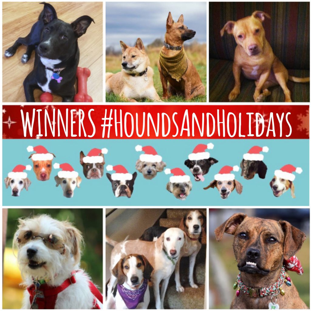 2016 Holidays, Hounds and Hot Buys Winners