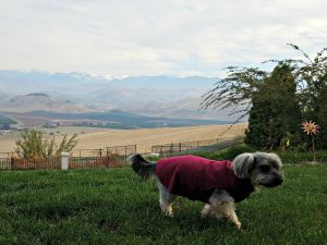 Holidays, Hounds and Hot Buys-Shasta in his Gold Paw Series Fleece