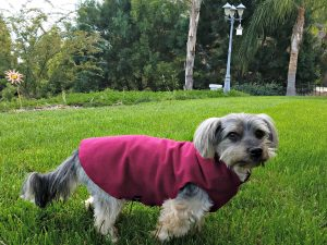 Holidays, Hounds and Hot Buys-Shasta wearing his Gold Paw Series Fleece
