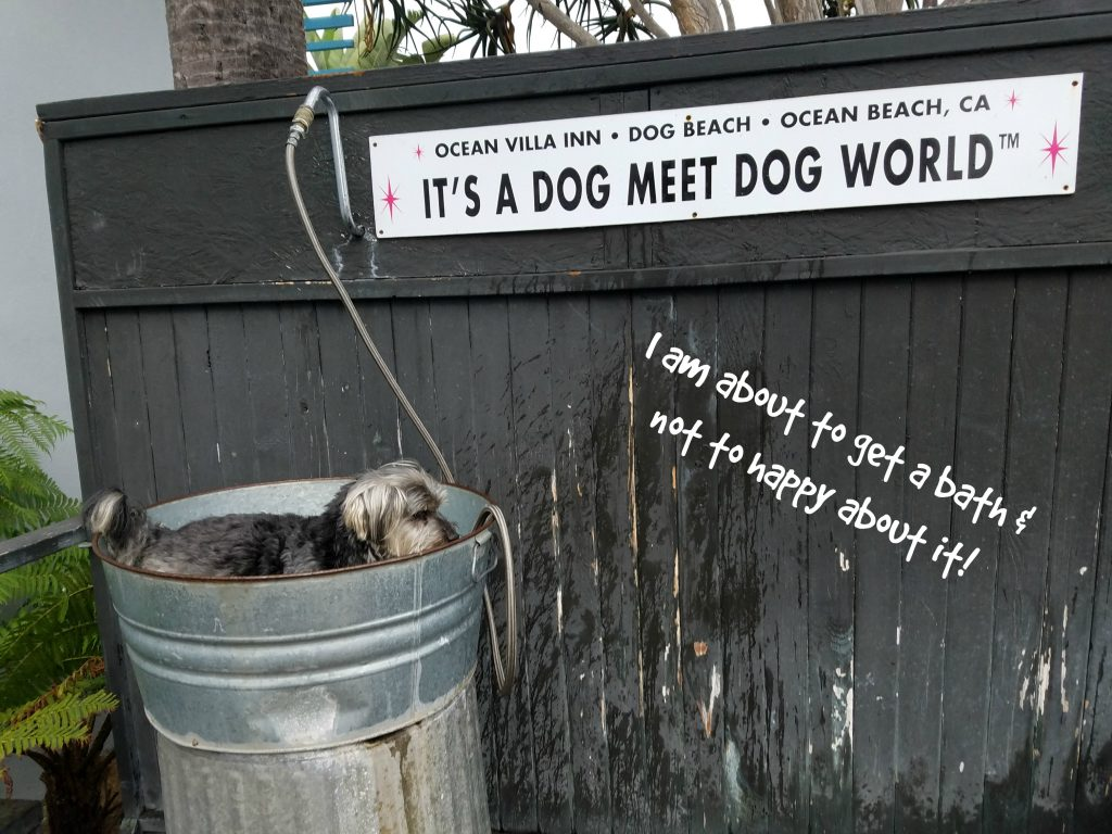 San Diego Ocean Villa Inn Dog Bath