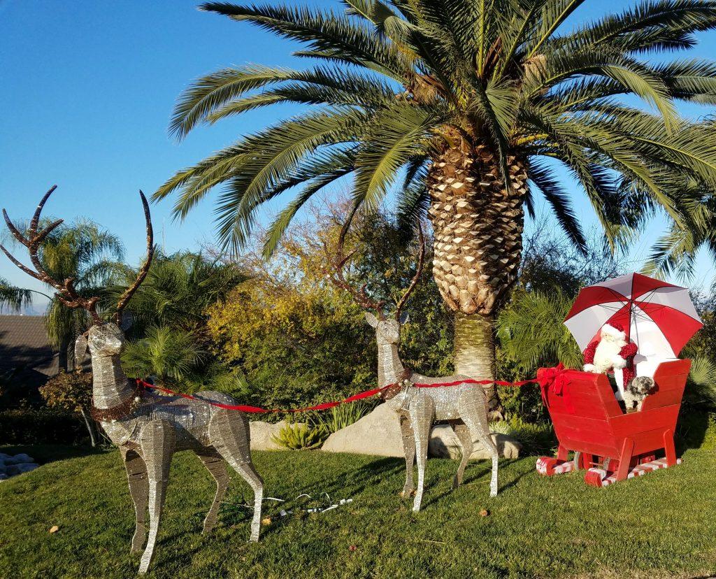 Shasta in Santa's Sleigh