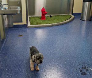 Snapshot Sundays March 2017: Pet Relief Area