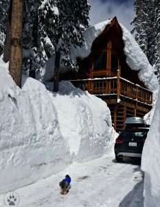 Snapshot Sundays February-Shasta in walls of snow