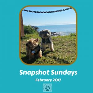 Snapshot Sundays February-Main image