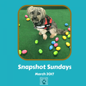 Snapshot Sundays March 2017