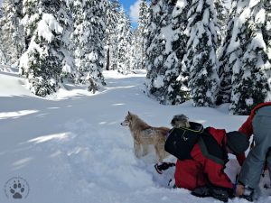 Snapshot Sundays February-Snowshoeing Shasta, Zara, Denton and Deb