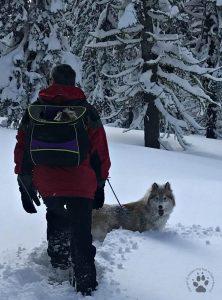 Snapshot Sundays February-Snowshoeing Shasta, Zara and Denton 3