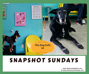 Snapshot Sundays The Dog Cafe