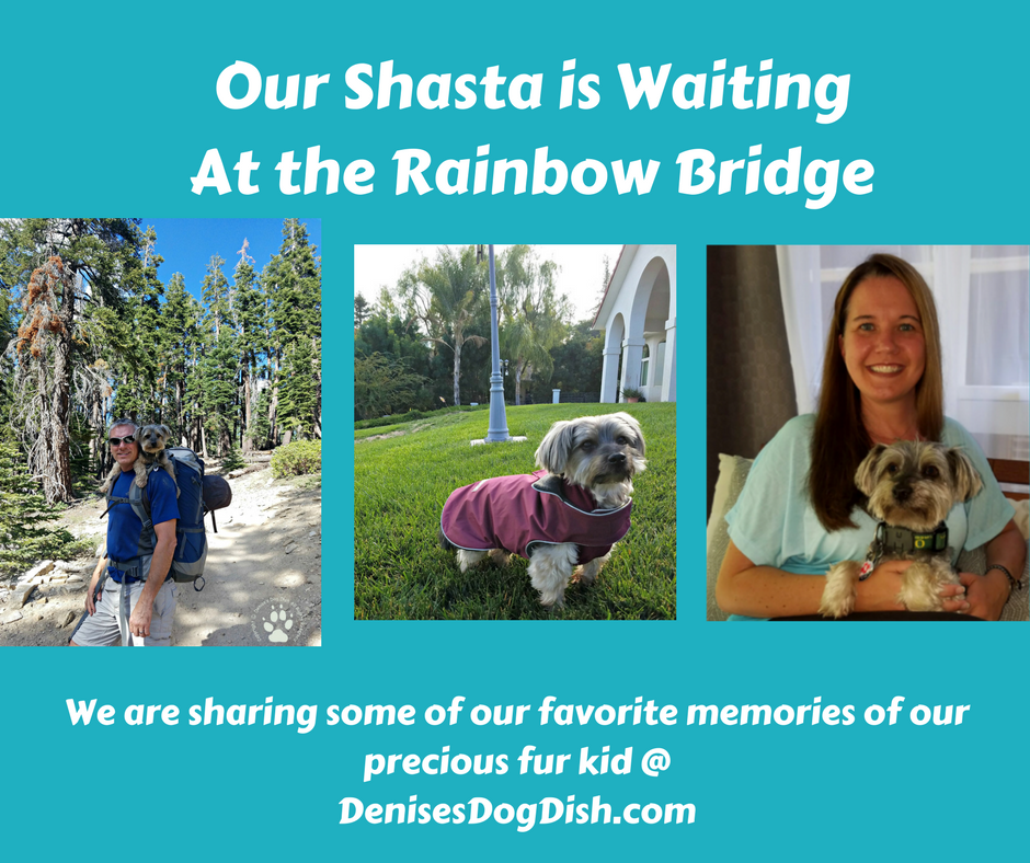 Shasta is waiting at the rainbow bridge
