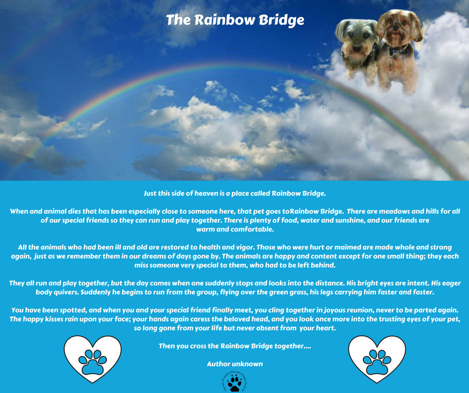 The Rainbow Bridge Poem-Harley and Shasta