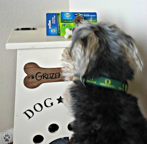 4 Gifts for Pets-Pet Safe's Busy Buddy keeping your dog's teeth clean