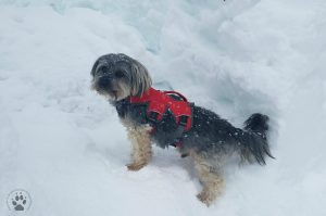 4 Gifts for Pets-Ruffwear Web Master Harness Something to Wear