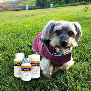4 Gifts for Pets-TechnyFlex for healthy joints and less pain