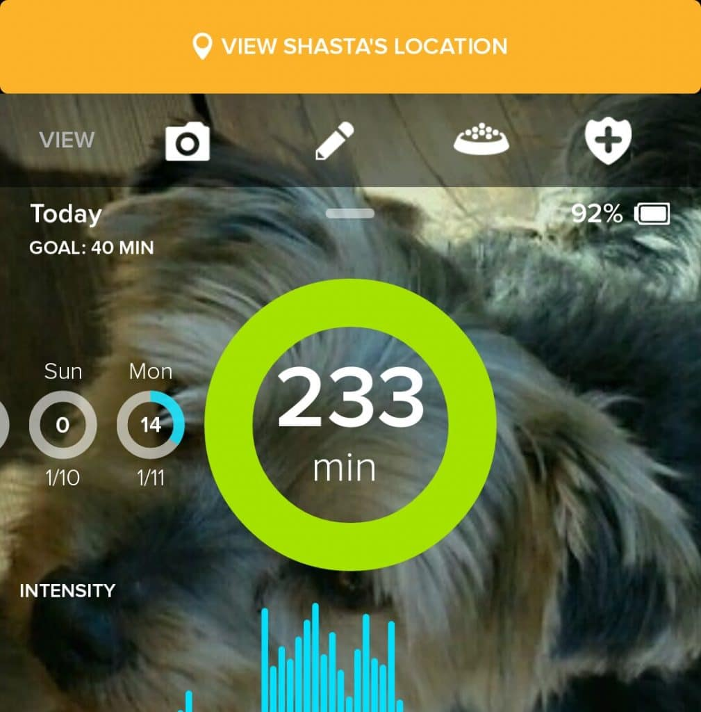 Keeping track of your dog's health with a whistle monitor.