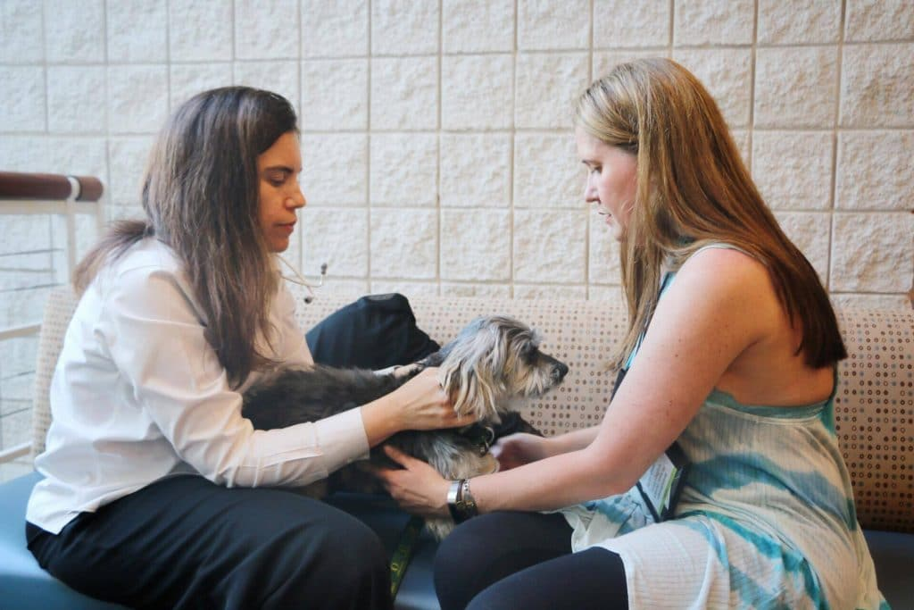 Finding the right vet-Shasta's Exam